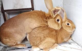 Через сколько можно спаривать крольчиху после выкидыша